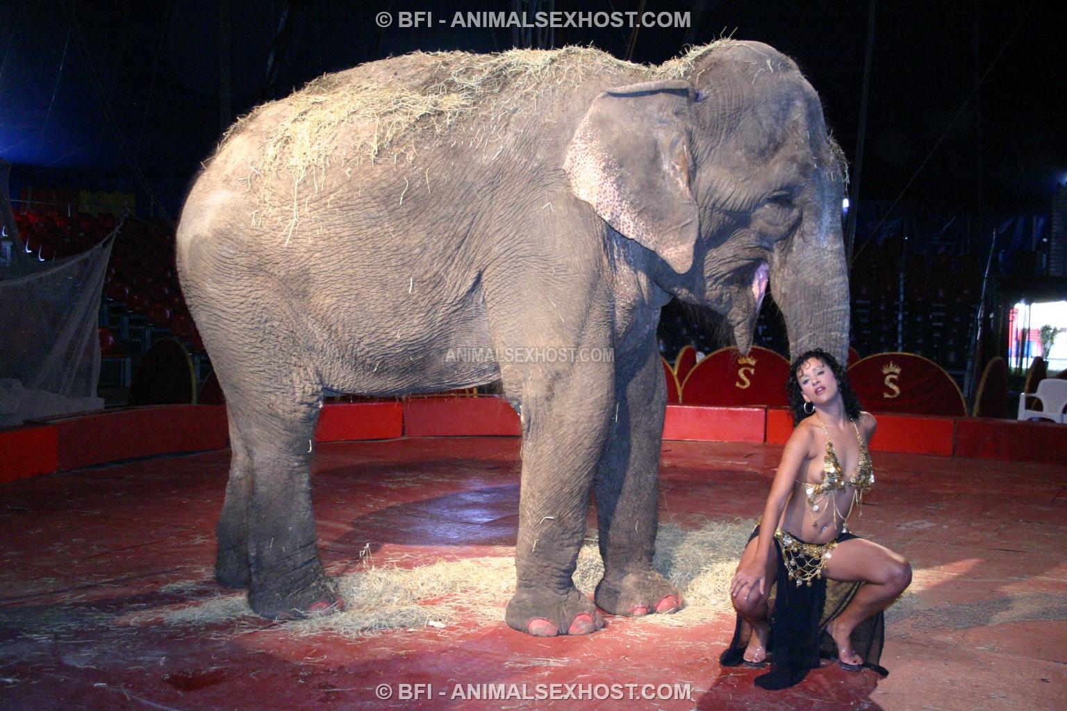 Adriana Morena Has Sex With An Elephant  Free Animalsex -6219