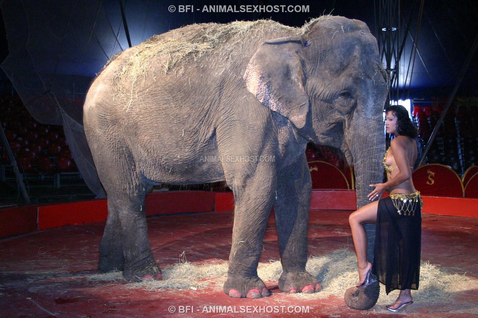 Adriana Morena Has Sex With An Elephant  Free Animalsex -1858
