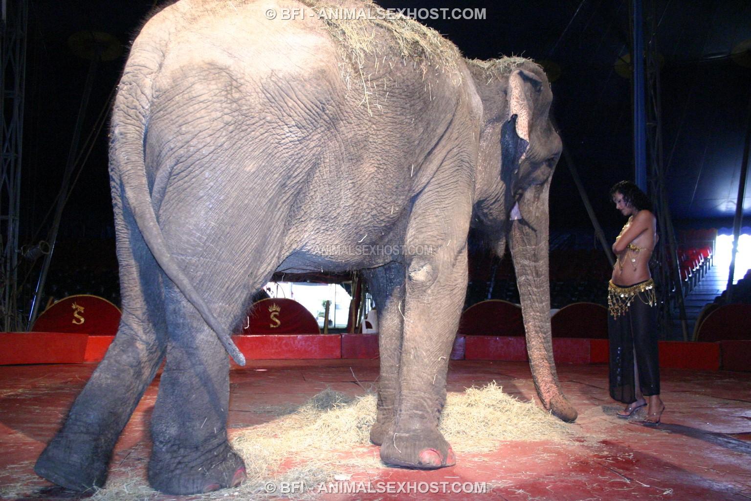 Adriana Morena Has Sex With An Elephant  Free Animalsex -8864