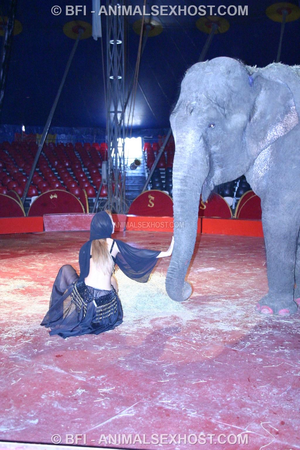Aiumy Elephant Porn  Free Animalsex Pictures-4843
