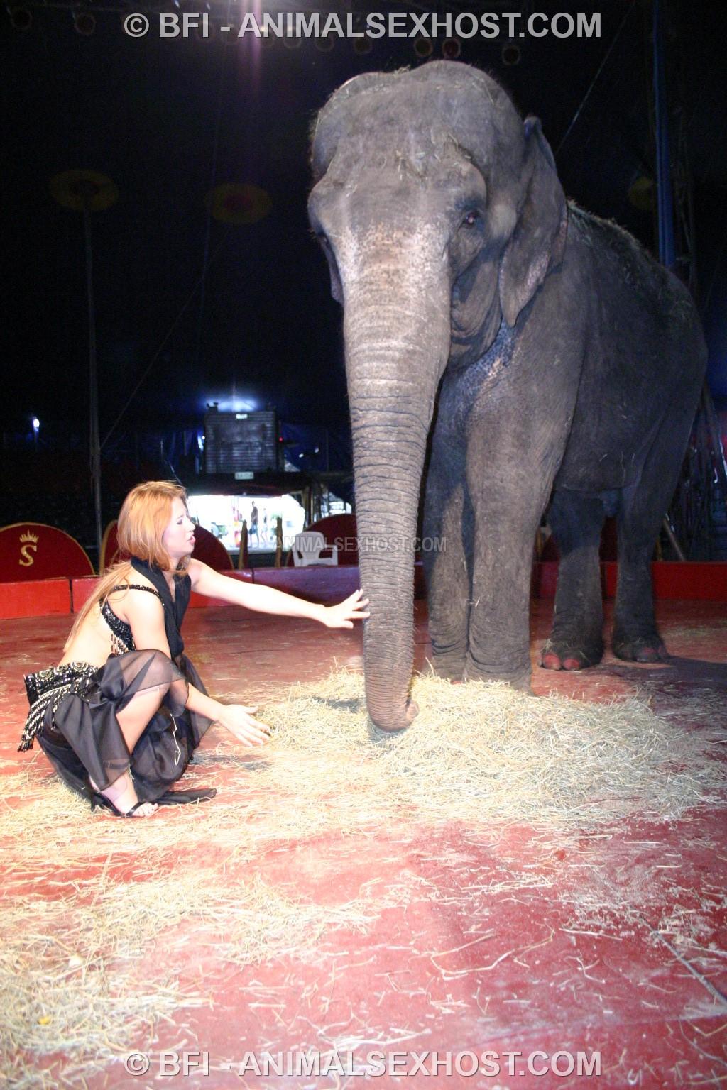 elephant free sex video