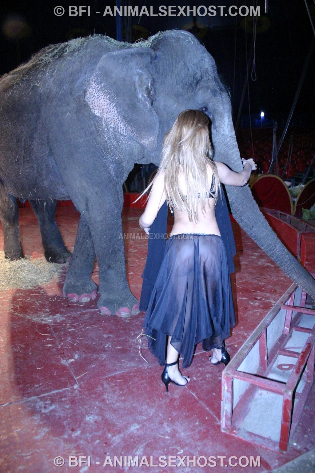 elephant porn sex video