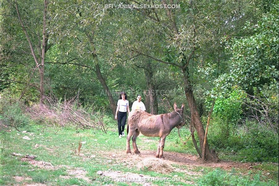 donkey blowjobs