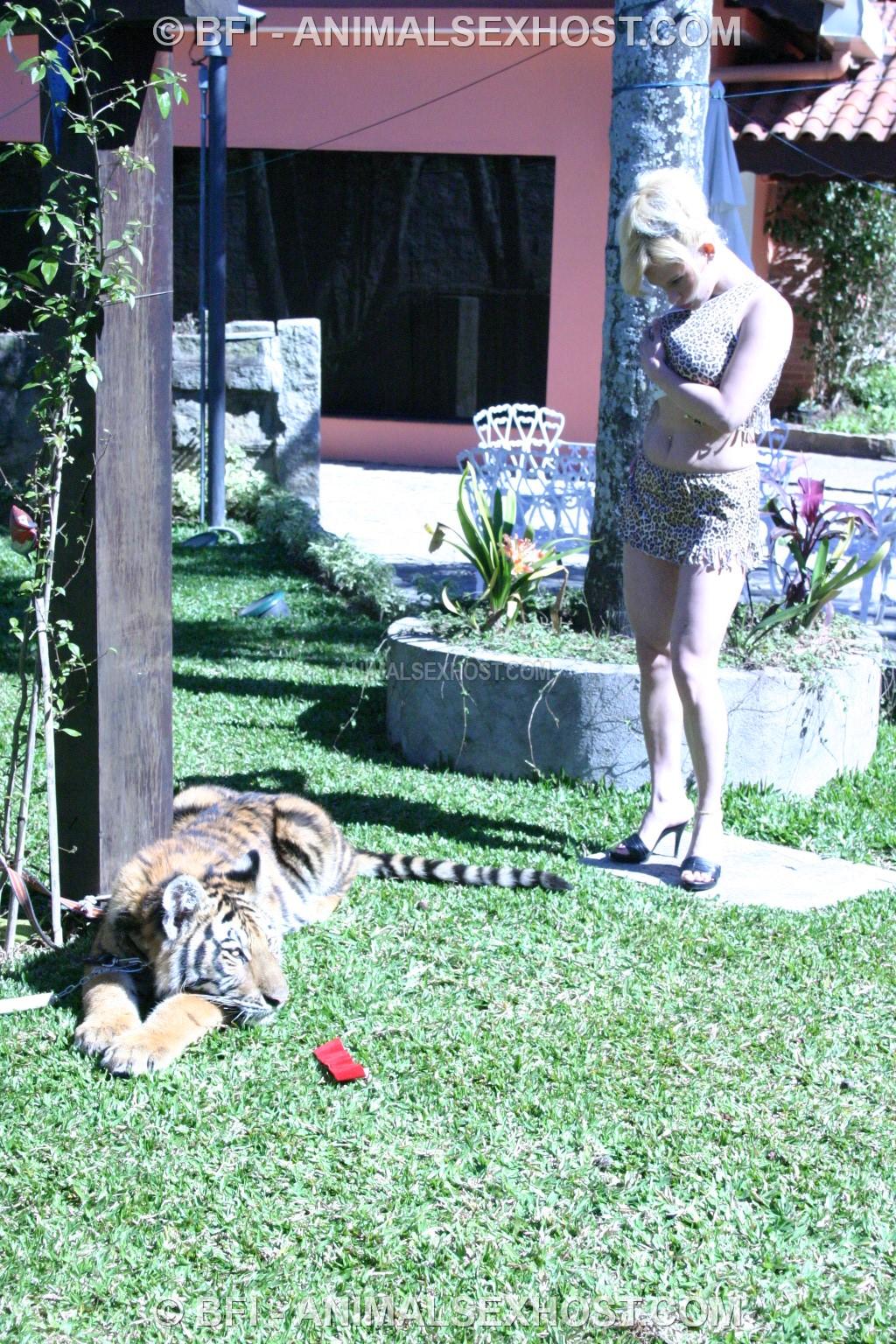 tiger sex