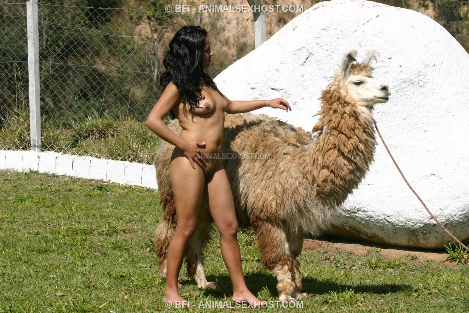 Секс с ламой