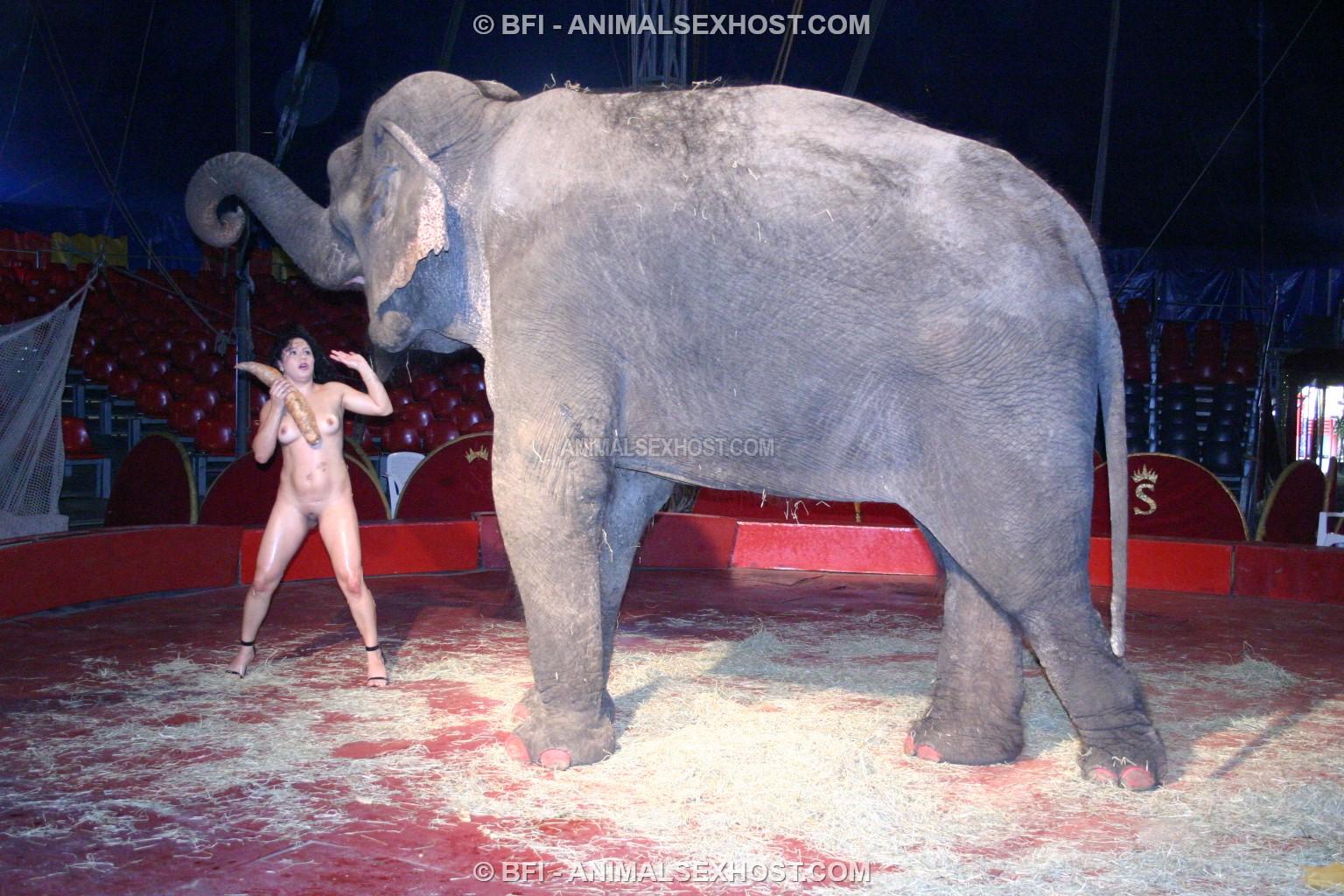 Elefant Sex Gratis