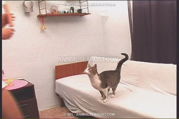 kitten sex