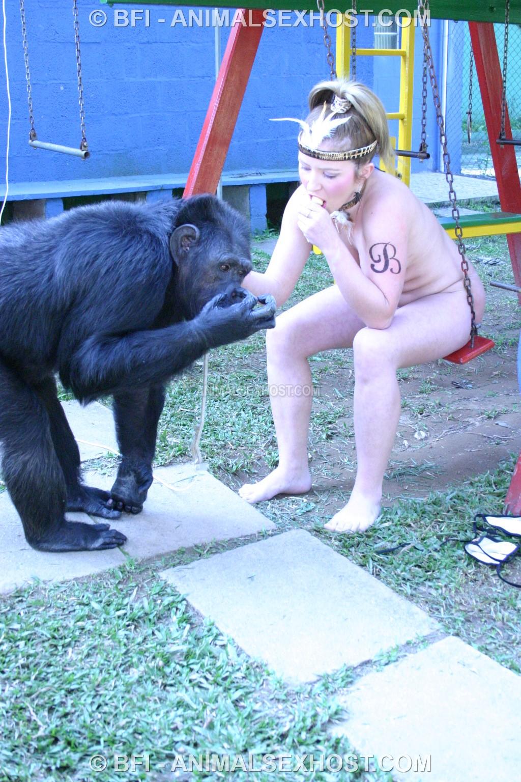 Chimpanzee sex videos