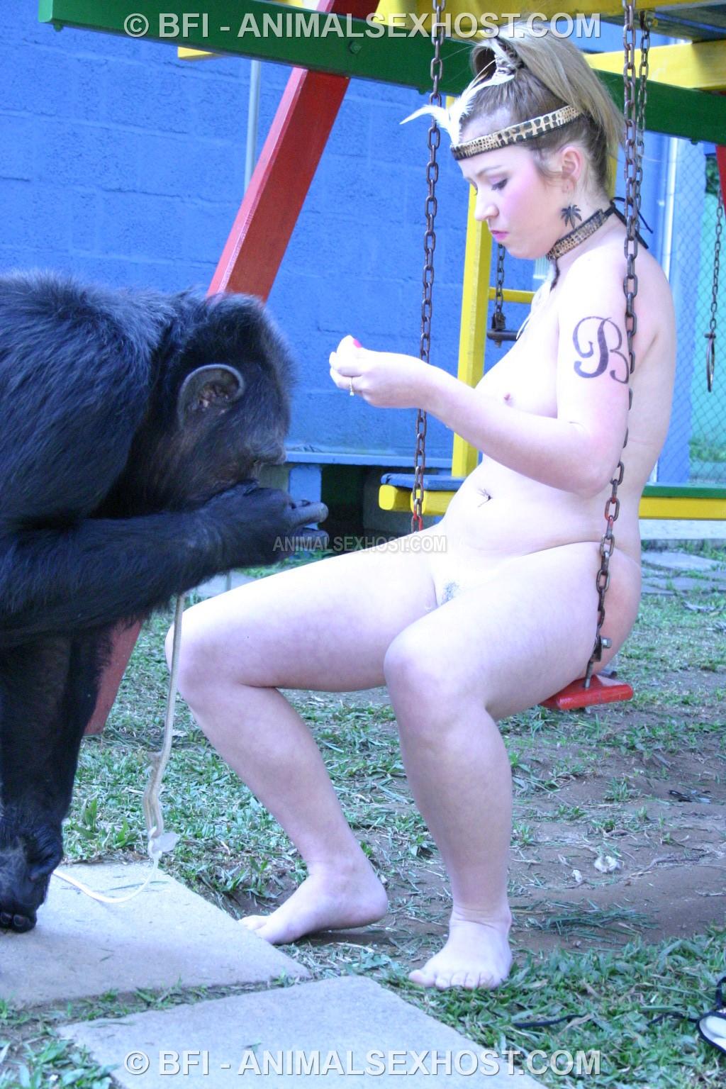 For Chimpanzee sex videos