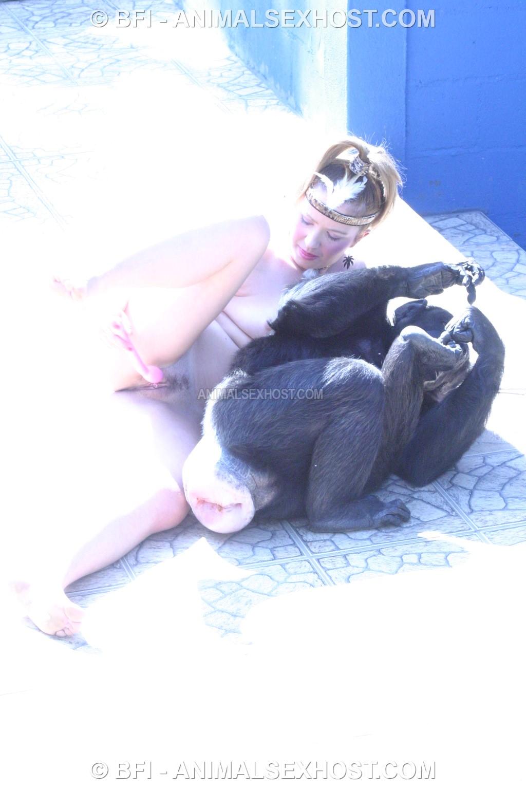 Please Chimpanzee sex videos that would